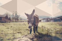 a grazing donkey