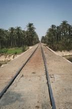 train tracks through a palm forests in Egypt