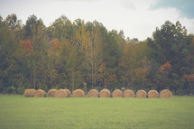 hay bales and fall forest