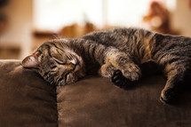 Cat sleeping on couch