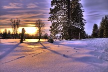 Snow covered forest at sunrise