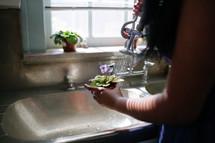 Woman watering flowerpot in the sink