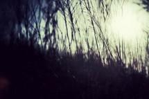 Long grass beside a pond