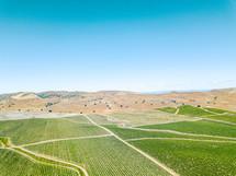 rows of crops on farmland