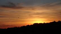 tree line at sunset