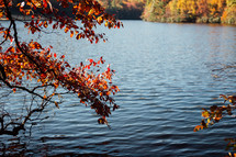 ripples in lake water and fall leaves