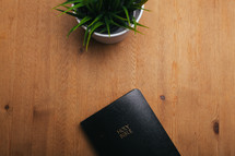 house plant and Bible on a table
