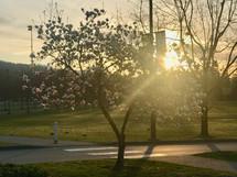 sunbeams through a spring tree