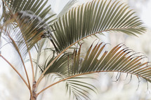 palm leaves on a palm tree