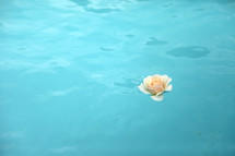 rose floating on teal water