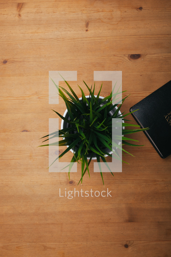 aloe plant and Bible
