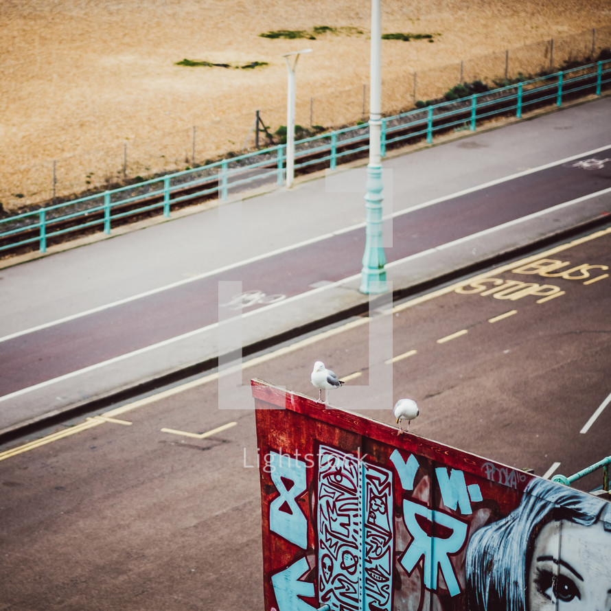 seagulls on a graffiti covered wall