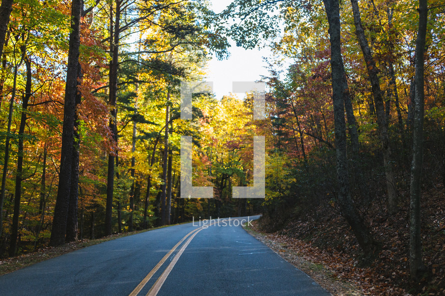 curve in a road and fall leaves on surrounding trees