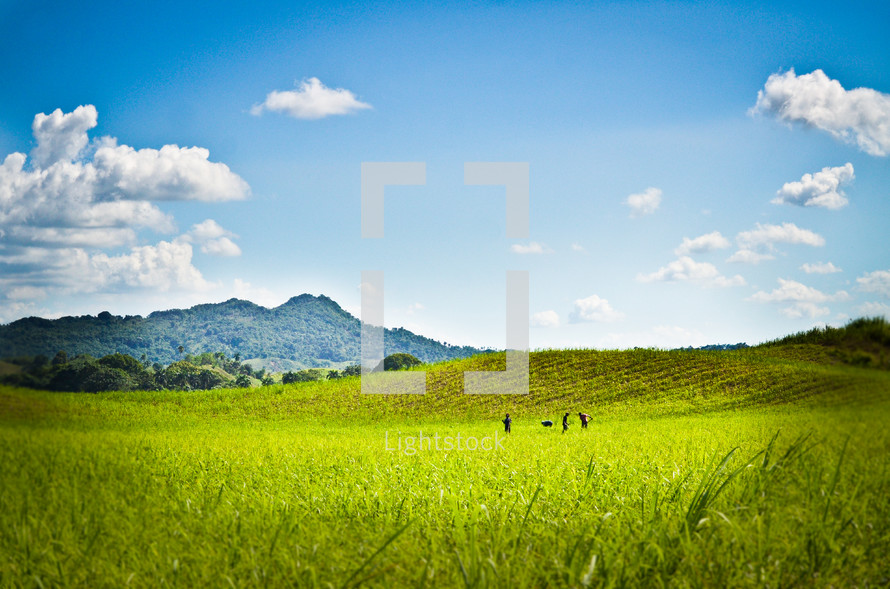 people on in lush green pasture