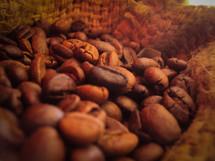 coffee beans in a burlap sac