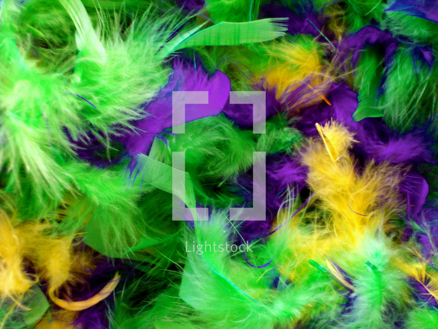 Feathers for Mardi Gras background