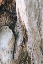 driftwood closeup