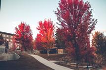 fall trees near an apartment complex
