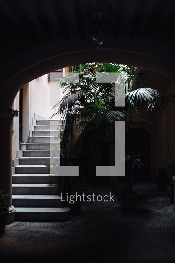 outdoor steps and palm tree