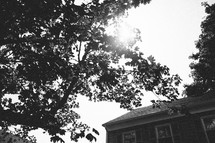 sunlight on a tree and a house roof