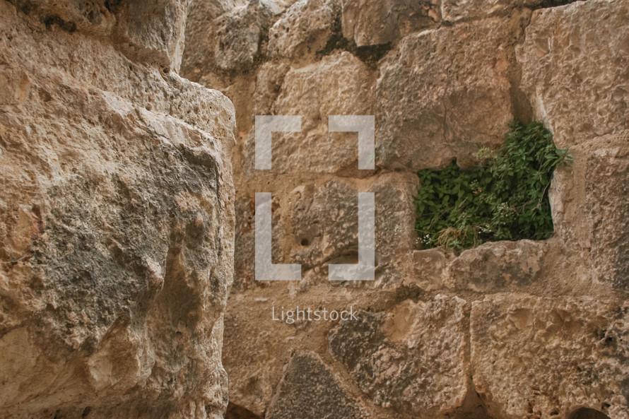 moss on a stone wall in Jordan