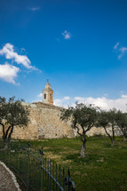 olive trees in the holy land