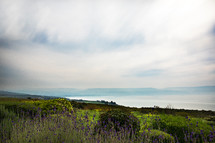 wildflowers on a mountaintop along a shore in the holy land