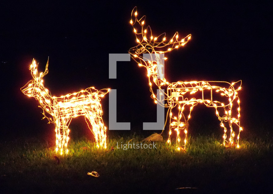 a pair of christmas deer light display stands together to light up the night sky with