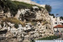 grasses growing on a rock wall in Jerusalem