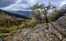 Bald Hills Landscape