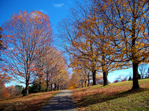 Orange leaves hang on to the trees and fall along a pathway in the fall in Virginia against a blue sky and green meadow.