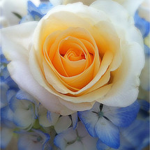 yellow rose and blue flowers