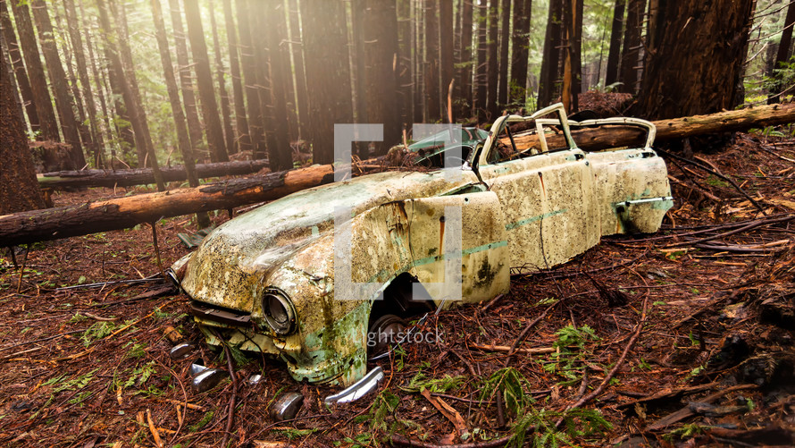 abandoned car in a forest