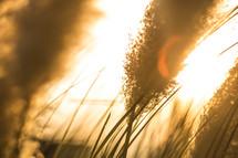 close up of blades of grass against a sunburst