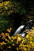 Water running through heavy foliage.