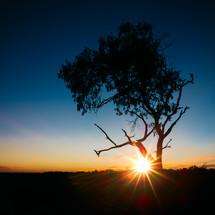 sunburst behind a tree at sunset