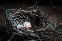 coins in a bird's nest