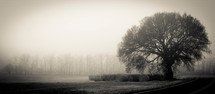 hay bales under a tree in fog