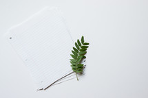 a twig on notebook paper stack