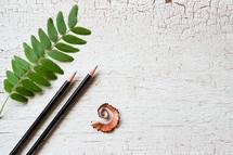 twig, pencils, and pencil shavings