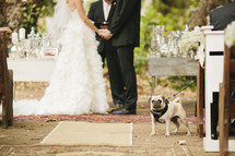 Bride and groom saying vows with pug in the aisle.