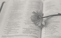 flower on the pages of a Bible, Psalm 21
