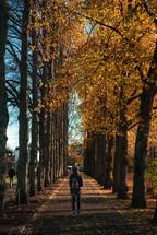 a woman walking on a sidewalk under fall trees