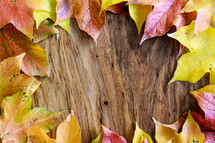 border of fall leaves on wood background