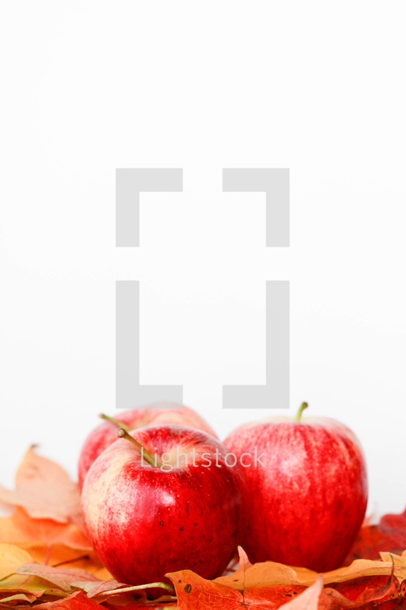 apples and fall leaves on a white background