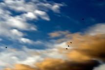 birds in flight in the sky