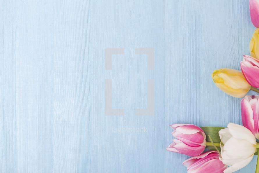Spring Flower Background For Easter Mother S Photo By Lamppost