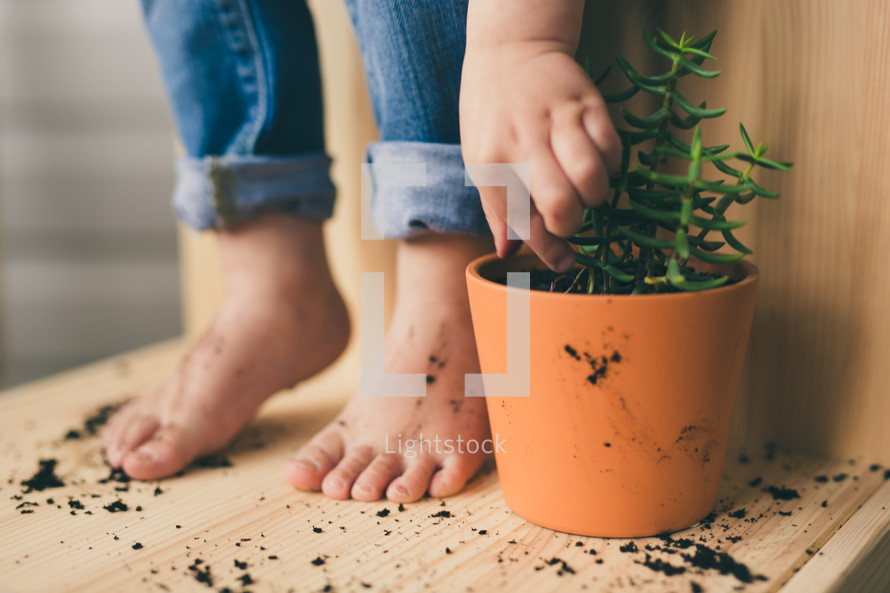 potted plant and a kid with dirty feet