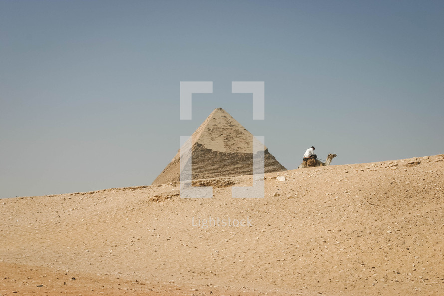pyramids in Egypt and resting camel