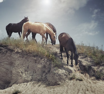 Four horses pasturing outdoors